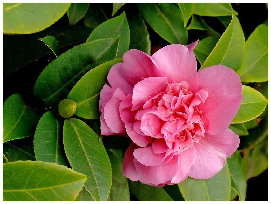 Le langage des fleurs c vivre en harmonie - Langage des fleurs amitie ...