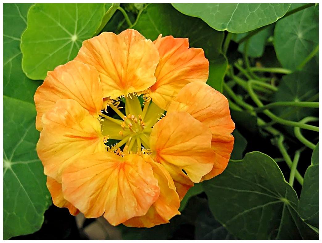 Le langage des fleurs c essentiellement nature - Langage des fleurs amitie ...
