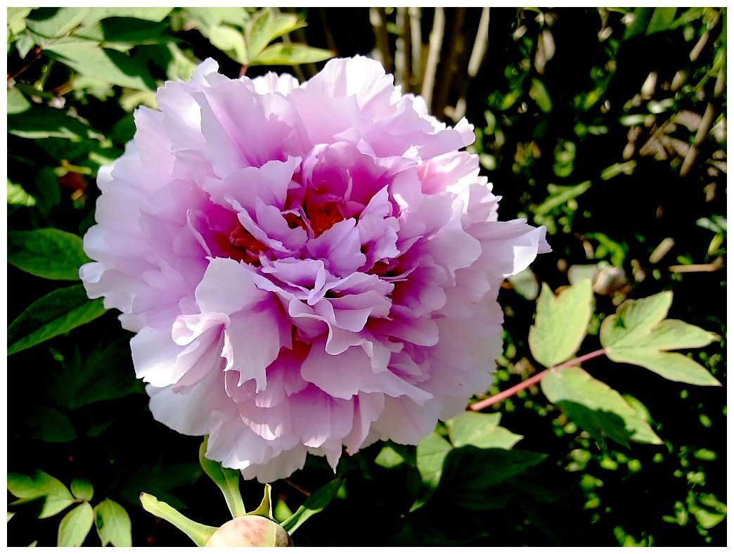 Le langage des fleurs o p essentiellement nature - Langage des fleurs amitie ...