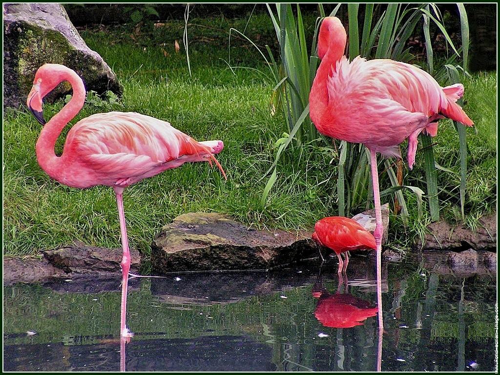 Ce que tu cherche qu 39 est ce qu 39 un flamant rose - Qu est ce qu un jardin ...