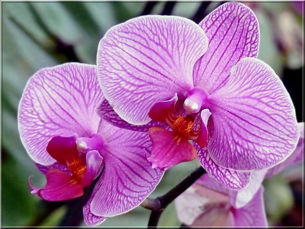 Jardin des orchidees essentiellement nature - Symbole de l orchidee ...