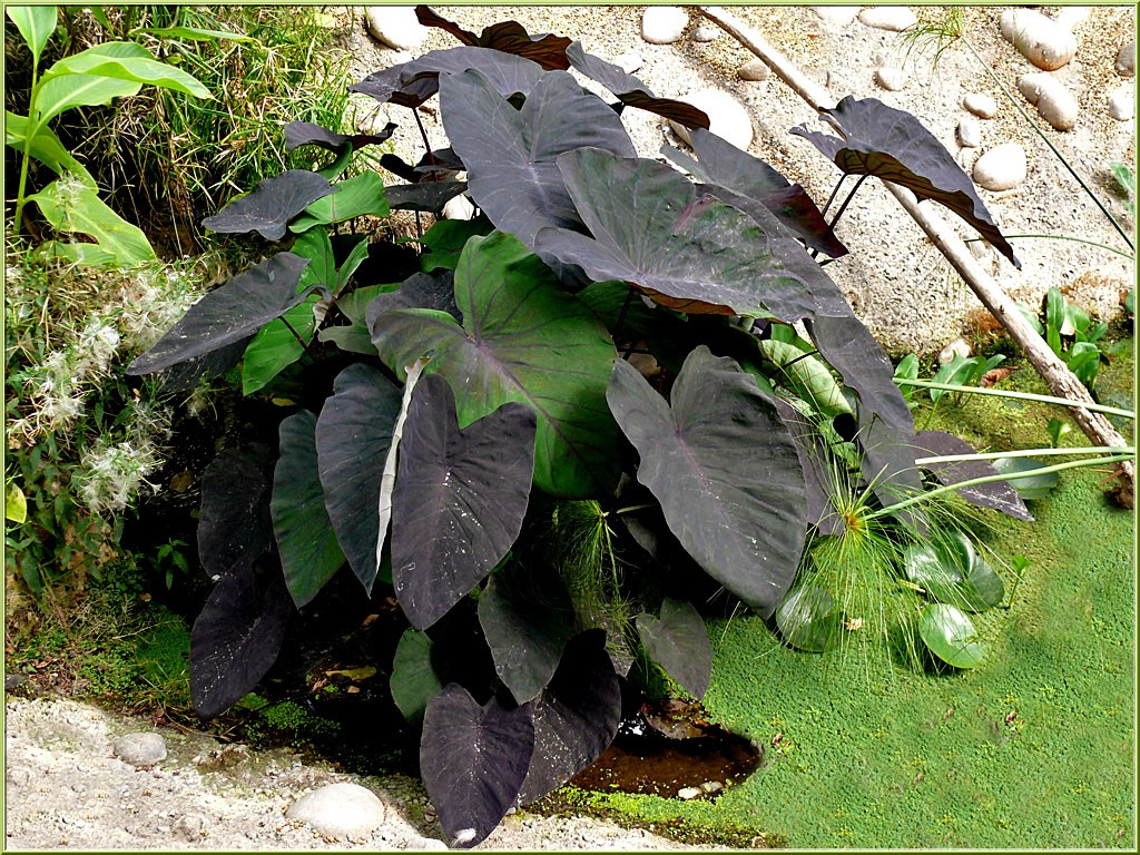L oasis essentiellement nature for Plante exotique exterieur