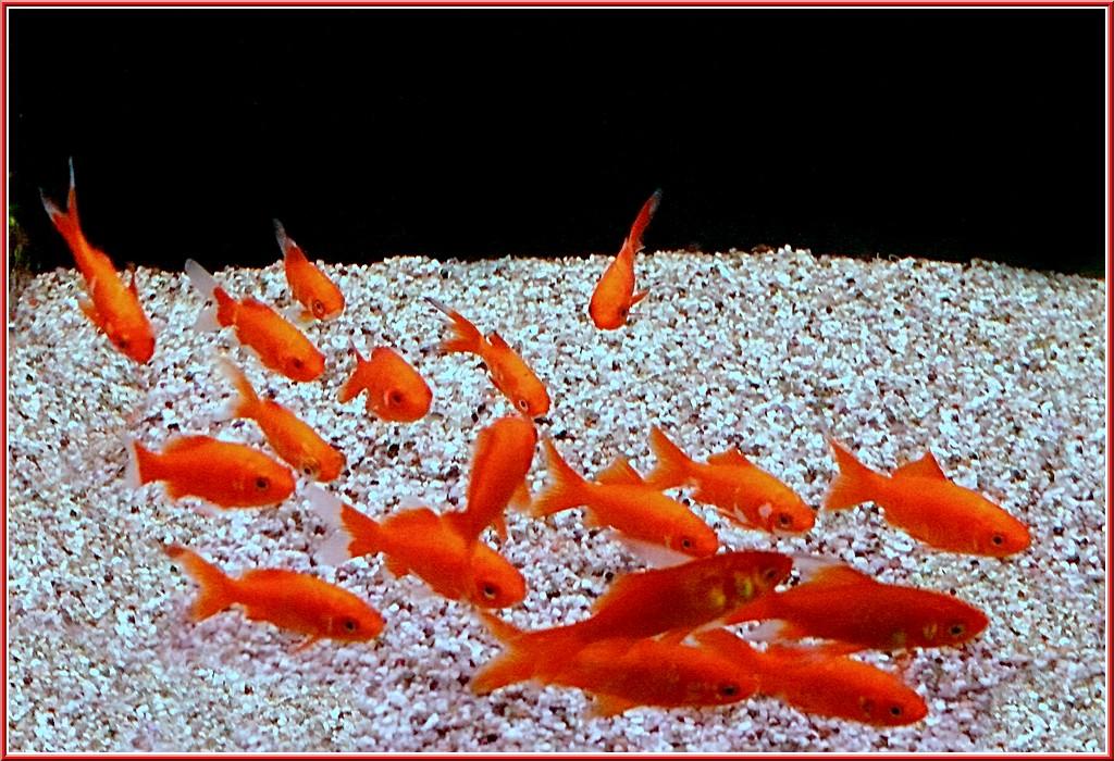 Une note d humour essentiellement nature for Petit poisson rouge