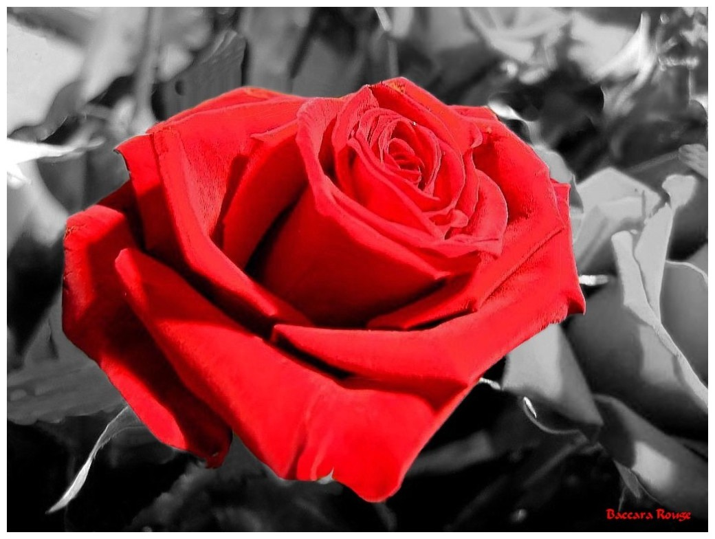 Roses Mon Evasion Nature Blog Page 4