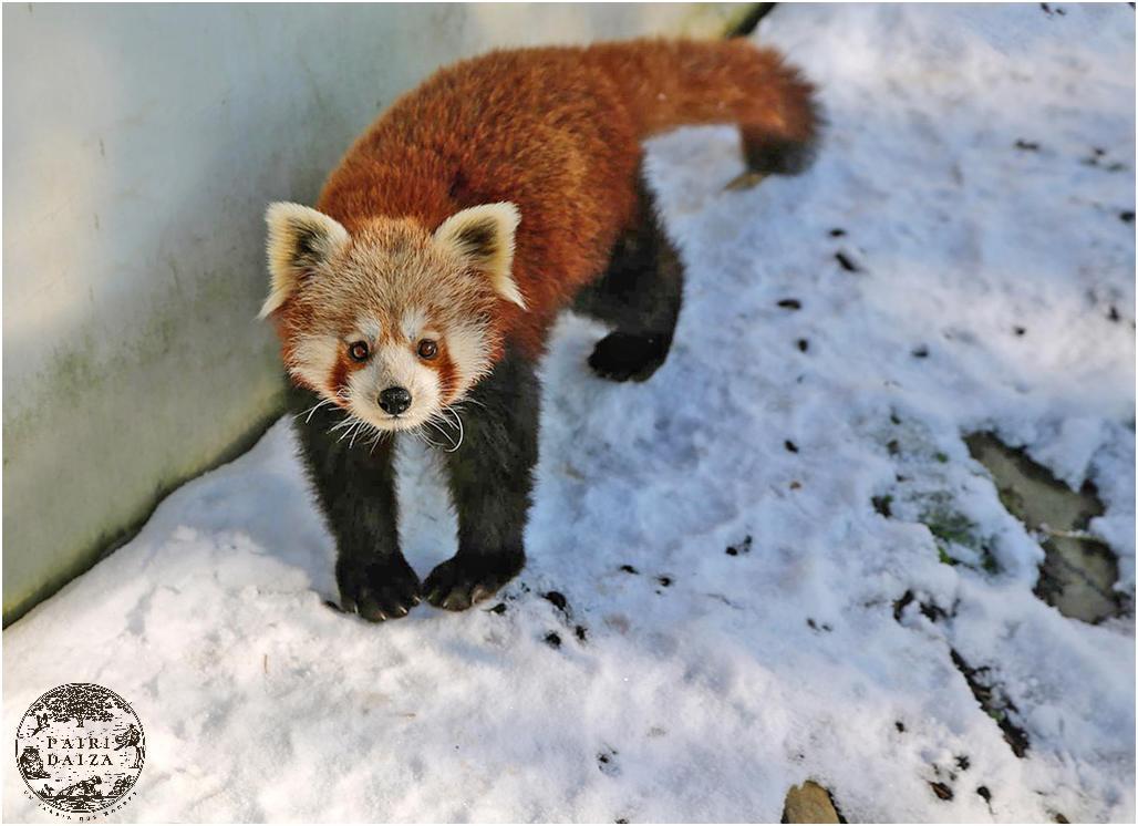Pairi Daiza hiver 7