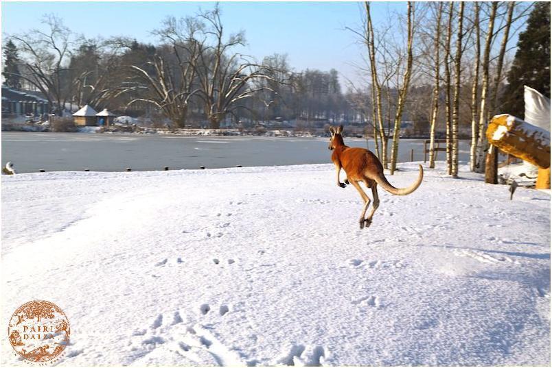 Pairi Daiza hiver