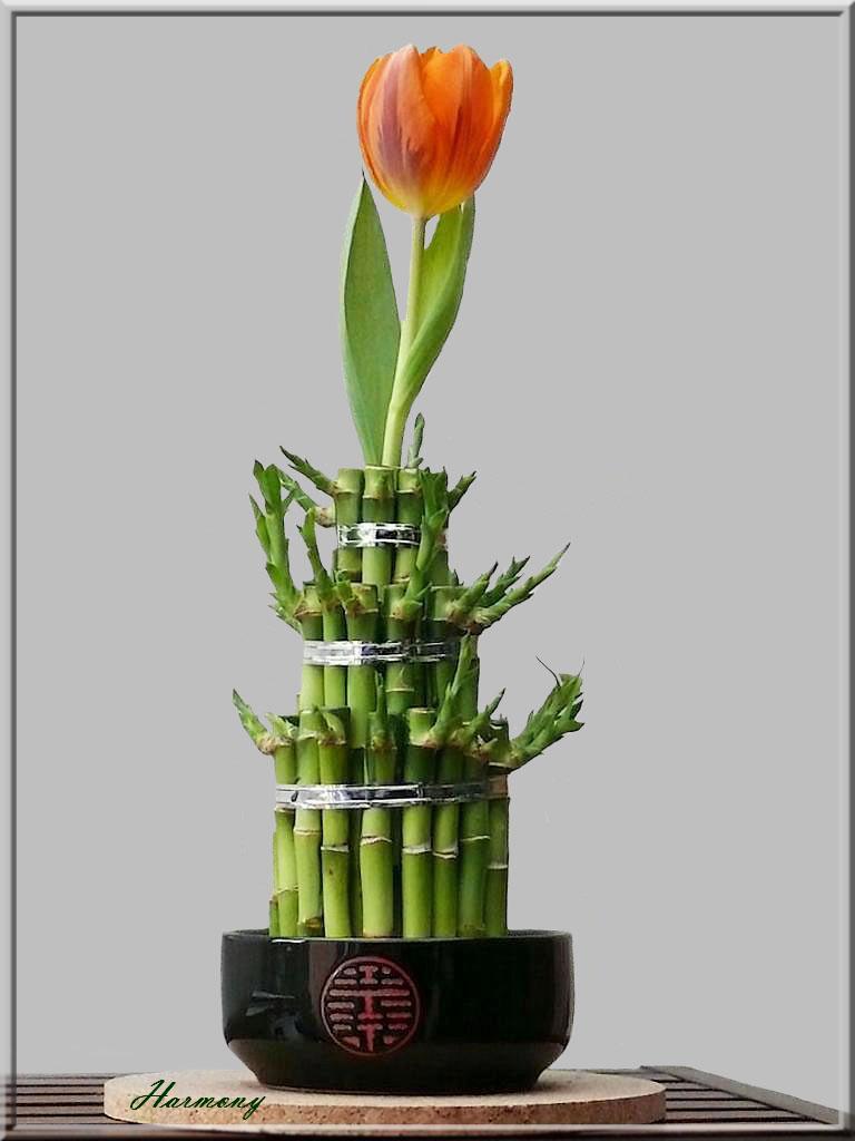 Tulipe et Bambou