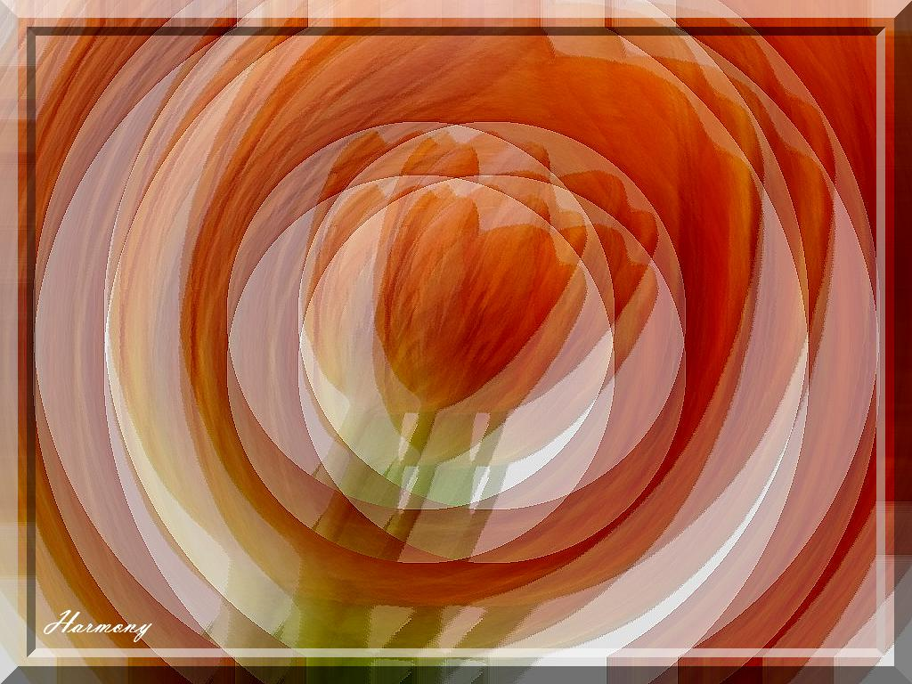 Variation tulipe.-