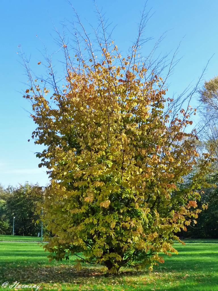 Lumière d'automne 1