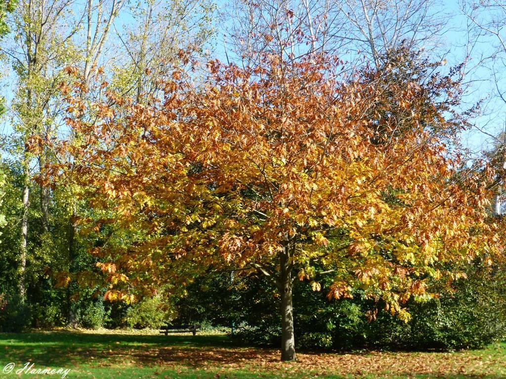 Lumière d'automne 2