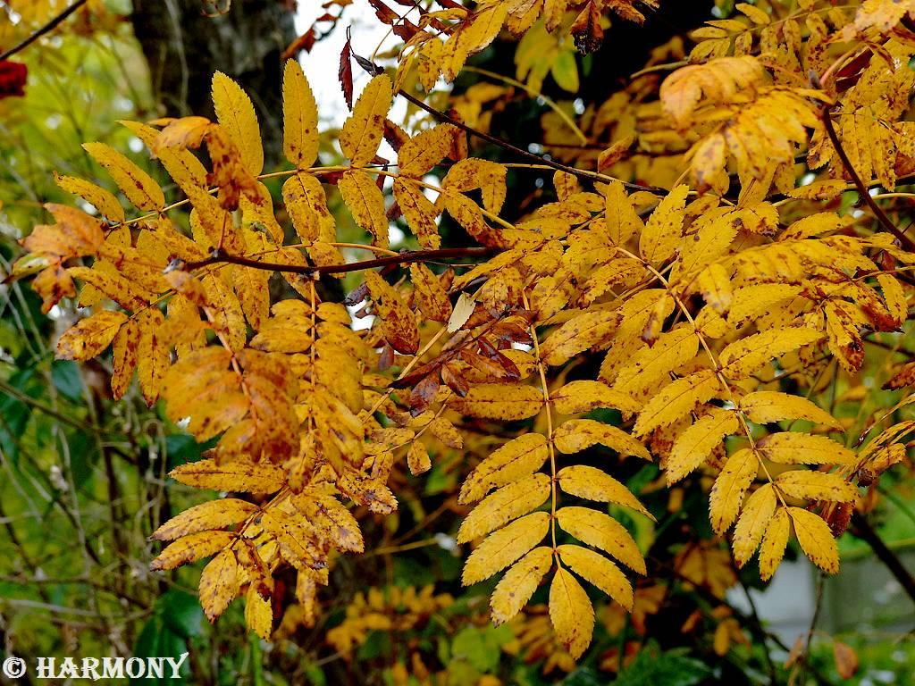 Feuillages d'automne 4