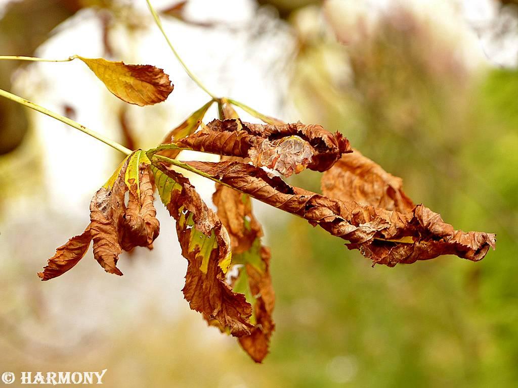 Feuillages d'automne 5