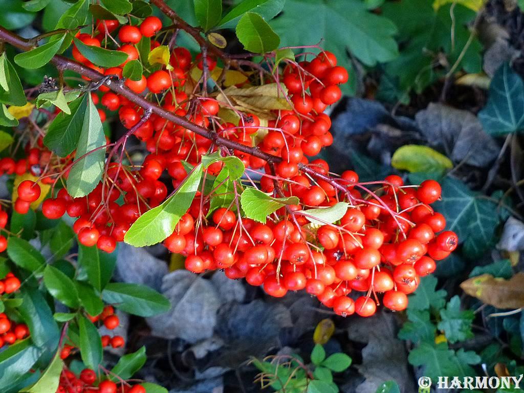 Fruits d'automne 2