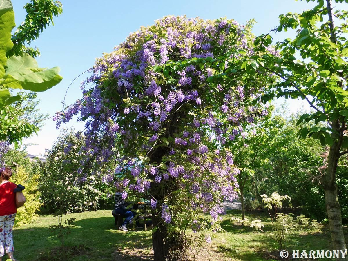 Quel Support Pour Une Glycine visite jardin (suite et fin) | evasion nature